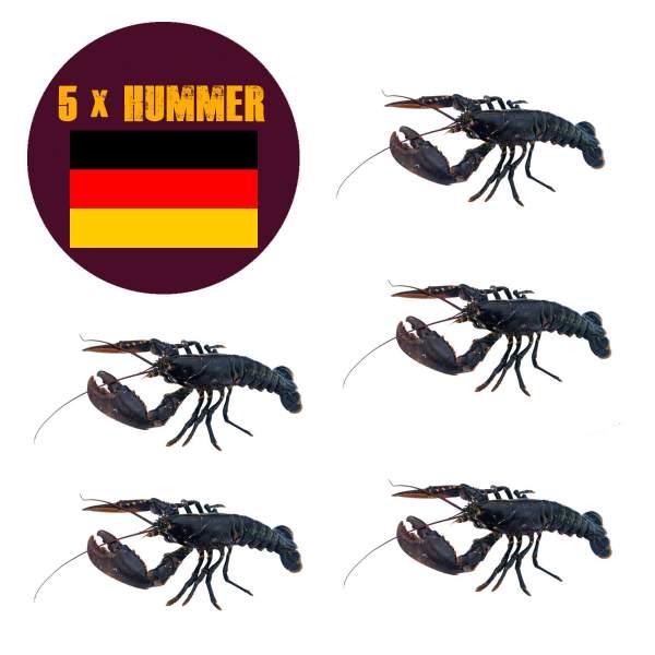 5 x Helgoländer Hummer