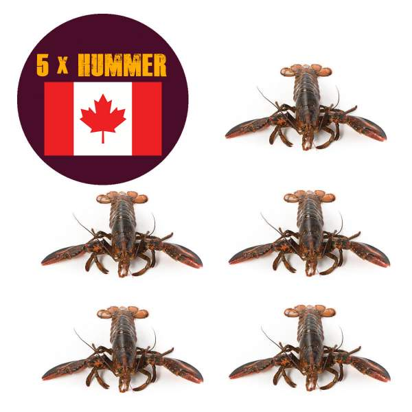 5 x Nova Scotia Hummer