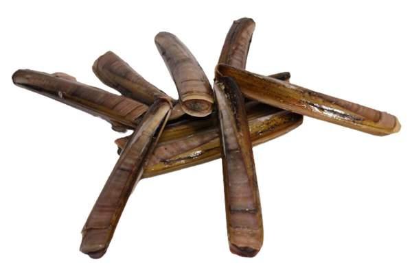 Schwertmuscheln