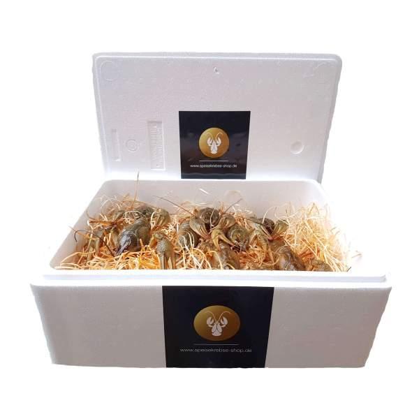 20 kg Mixbox - Flusskrebse lebend